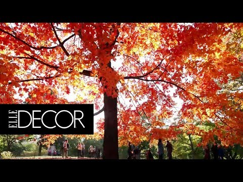 The 7 Best Places to See Fall Foliage in New England | ELLE Décor