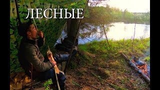 One in Taiga with minimal equipment | FISH TRAP | ROPE FROM THE BREAST | FISHING