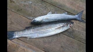 Ловили саргана, а поймали.../Рыбалка в ноябре