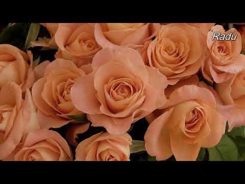 Aurel Tamas  -Cantec pentru mama Cel mai scump si drag cuvant   Mama