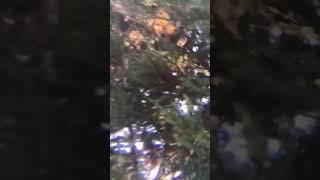 Various tree dwelling organisms