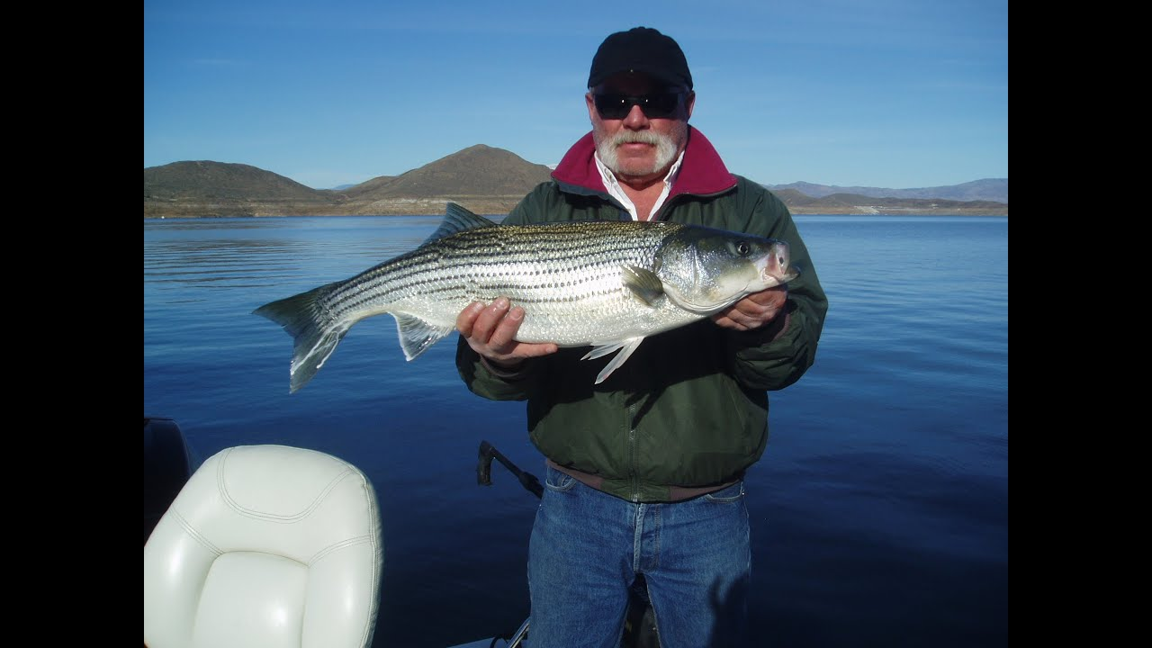 Fishing diamond valley lake 16 pound striper the reel for Diamond valley lake fishing