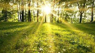 Música Relajante Antistress | Música de Relajación y Meditación | Música para Relajarse, Masajes