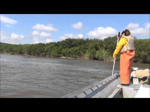 Dipnetting Salmon on the Yukon River 2013