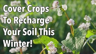 Cover Crops To Recharge Your Soil This Winter!