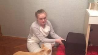DIY будка для собаки своими руками. Бесплатный домик для вашего питомца