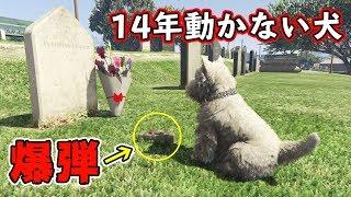 【GTA5】墓石に寄り添う犬は、何をしても動かないのか!? thumbnail