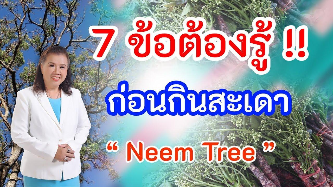 คิดไม่ถึง !!  7 ข้อต้องรู้ ก่อนกินสะเดา เพื่อสุขภาพ | Neem tree | พี่ปลา Healthy Fish