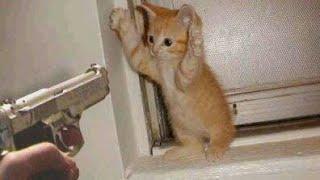 قطط مضحكة جدا!!!أظرف قطط في العالم!!