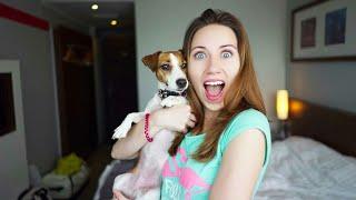 Популярные собаки блогеров.