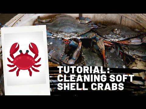 tutorial:-cleaning-soft-shell-crab
