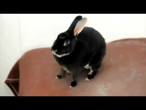 Funny Screaming Rabbit