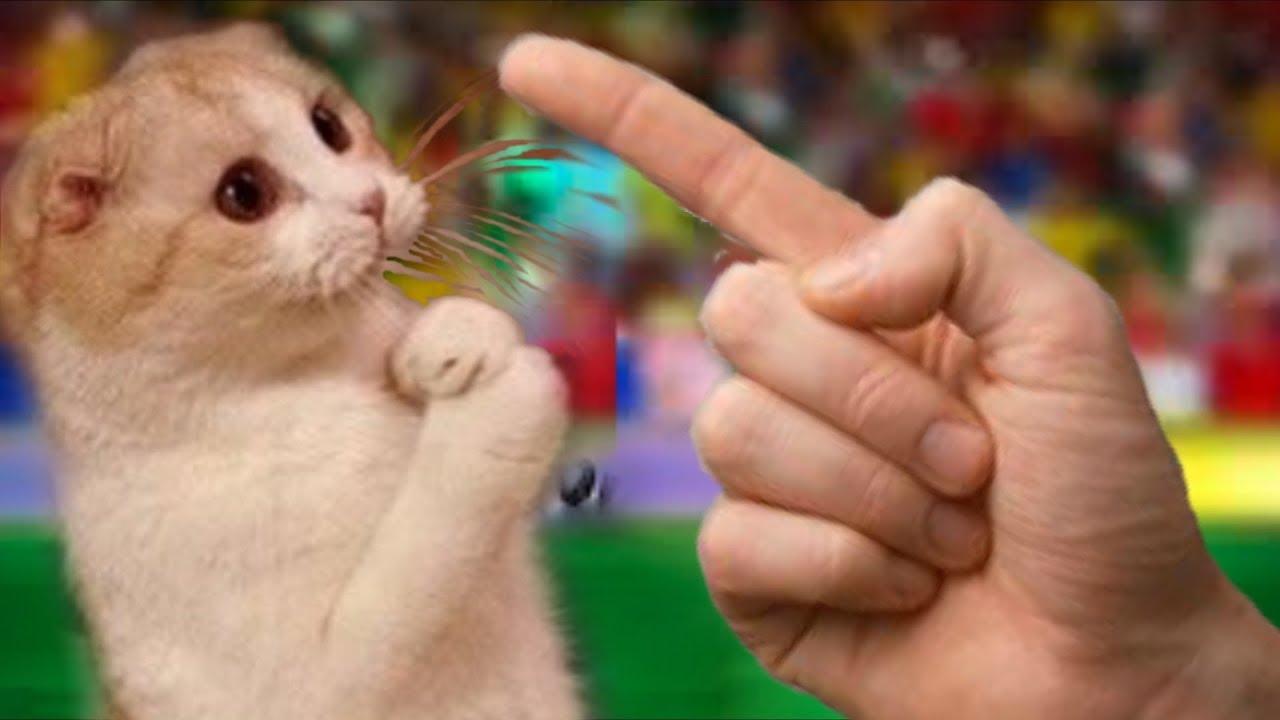 Flocosenii compilation faze comice cu pisici amuzante doza de ras Ep 45