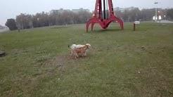 Kampuksen Kodittomat Koirat