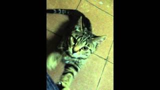 Котенок ищет дом и любящего хозяина!