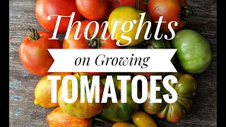 Thoughts on growing tomatoes - Elmdale Estate