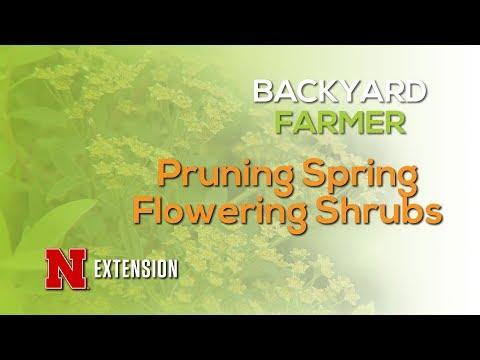 Spring Blooming Shrub Pruning