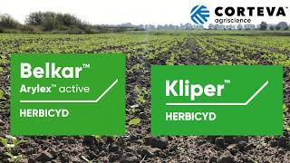 Belkar™ + Kliper™ - nowe herbicydy do zwalczania chwastów w rzepaku jesienią. Zobacz, jak działają.