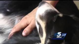Oklahoma City dog, Angel, a hero after saving children