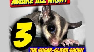 AWAKE ALL NIGHT THE SUGAR GLIDER SHOW EPISODE 3 JAN 2013 NEW BREEDERS NAIL CLIPPING bonding cages