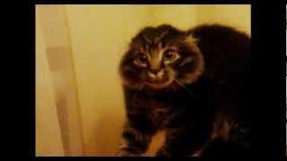 Женщина--------кошка