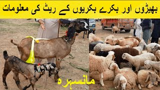 Sheeps And Goats For Sale || M…