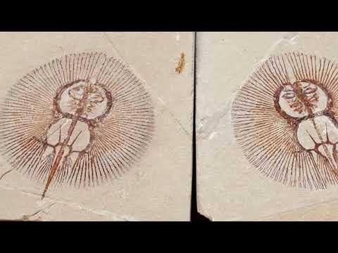 Fish fossils of Lebanon