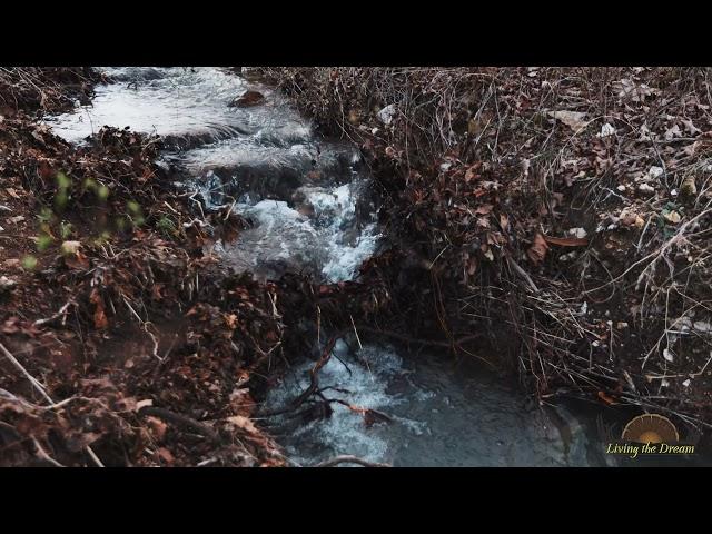 Bunker Bottom Springs