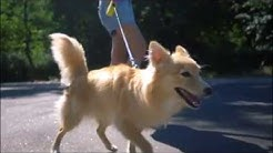 Hundeverhalten - mach den Test
