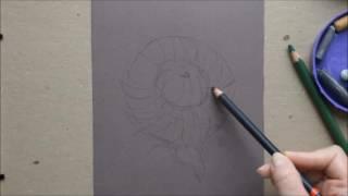 Как нарисовать хризантему пастелью
