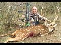 Trophy Axis Buck Bow Kill: Through the Boiler Room