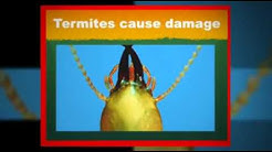 Termite Inspections Englewood Florida 941-485-6313