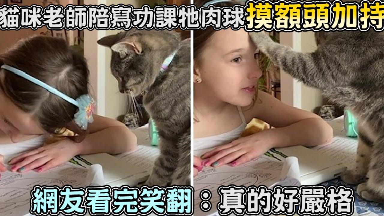 貓咪老師陪寫功課,牠肉球摸額頭加持,網友看完笑翻:真的好嚴格
