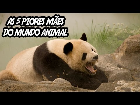 Thumbnail: As 5 Piores mães do Mundo Animal