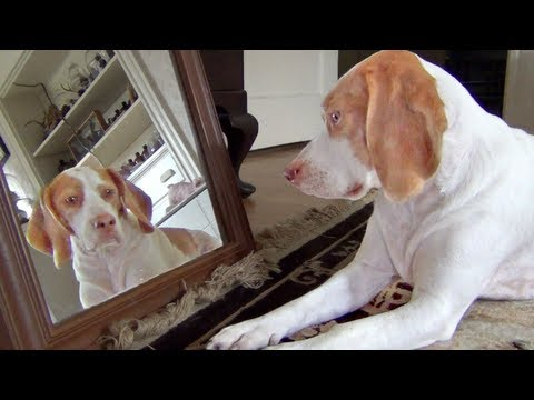 Dog Obsessed with His Own Reflection in Mirror: Cute Dog Maymo