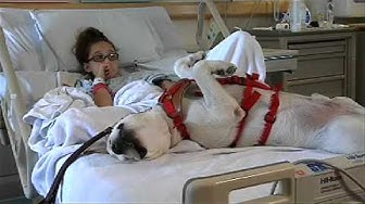 Service Dog Eases Patient's Anxiety
