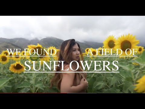 Topless at Maui Sunflowers!? + Maui Sunset!