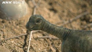 Baby Tambatitanis vs Tyrannosaurus - DINOSAURS