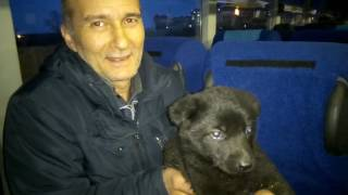 видео Провоз животных :: АВТОВОКЗАЛ ТОМСКА
