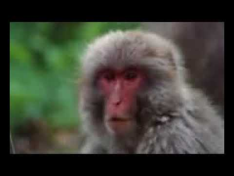 Best Documentary 2016   Wildlife Nature Documentary HD Wild Asia A Forest for