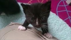 7 süße Katzenbabys - Katzen Babys - spielen - 6 Wochen alt - Babykatze - Babykatzen