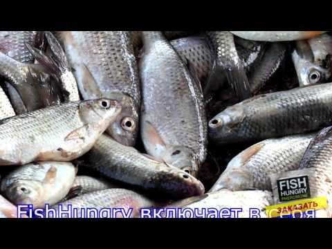 купить активатор клева fish hungry