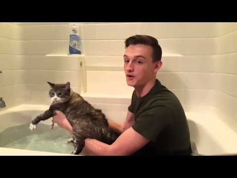 How to wash your cat