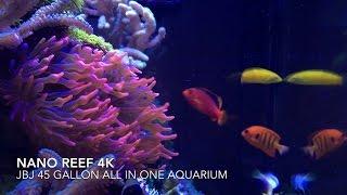 amazing nano reef tank in 4k   iphone 6s plus