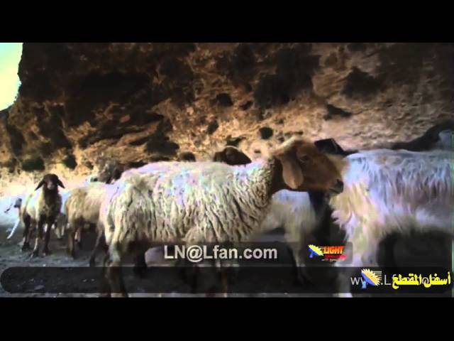 60 مغارة حقل الرعاة في بيت ساحور