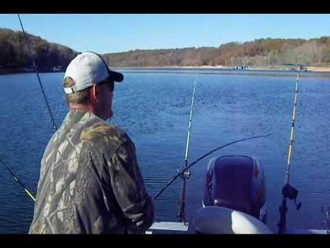 Arkansas striped bass fishing beaver lake arkansas 11 5 for Beaver lake arkansas fishing report