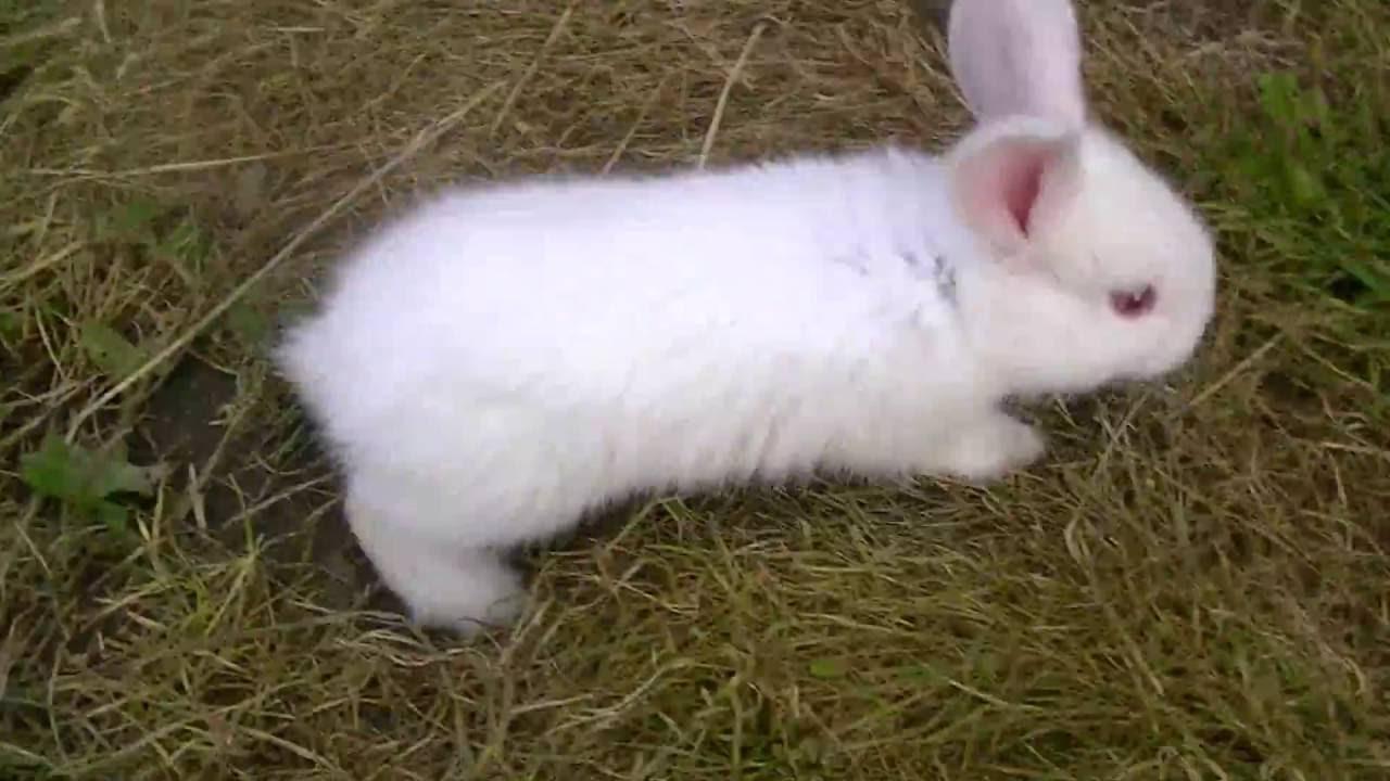 Kid video  Lovely rabbits for kids  Rabbits for children  YouTube