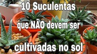 10 Suculentas Que Não Devem Ser Cultivadas No Sol