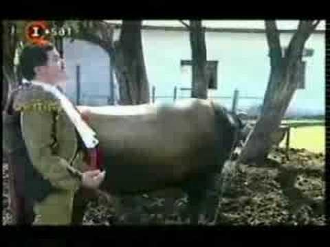 Casero y el toro Arturo - Cha Cha Cha