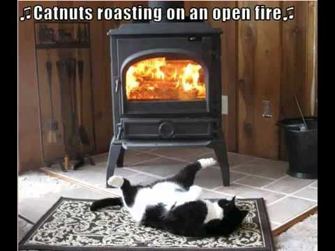 Funny cat nuts roasting youtube funny cat nuts roasting publicscrutiny Image collections